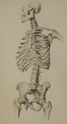 An historical illustration of a human skeleton