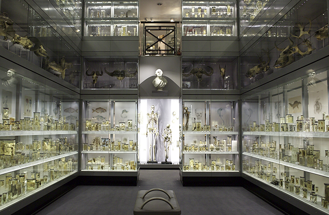 A photograph of the Hunterian Museum's display cases