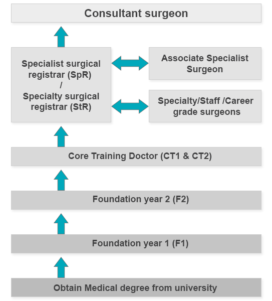 A graphic illustrating the structure of the surgial profession