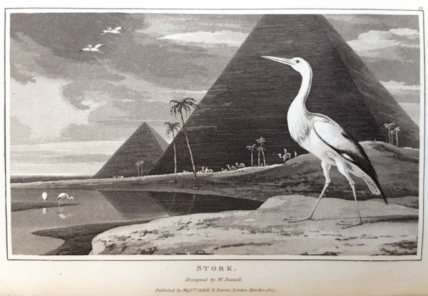 Zoography: the stork
