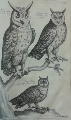 Ornithology owls