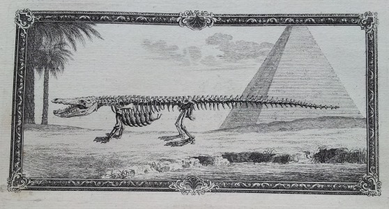 An illustration from Osteographia, depicting a skeletal crocodile in Giza, Egypt