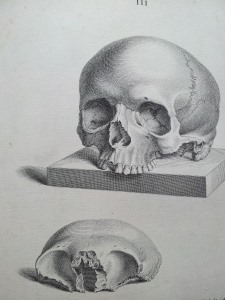 An illustration from Osteographia, depicting a skull in two parts, the jaw removed