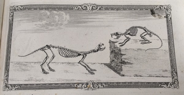 Rat and Weasel skeletons in their 'natural environment', as depicted in illustrations from the Osteographia
