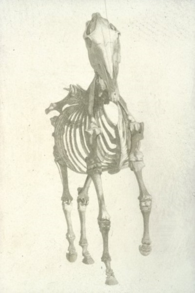 Stubbs: Anatomy of a Horse