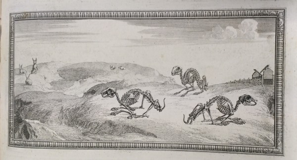 Rabbit skeletons in their 'natural environment', as depicted in illustrations from the Osteographia