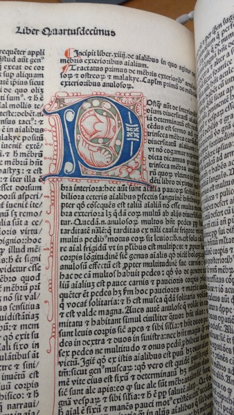 Incunabula illumination