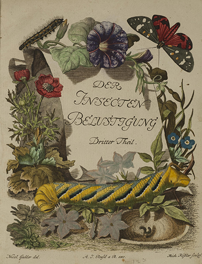 Illustrations of insects and plants from Roesel's Die monatlich herauskommende Insecten-Belustigung