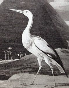 Zoography: the stork (close-up)