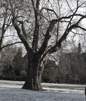 Lincolns Inn Fields 3: Planetree