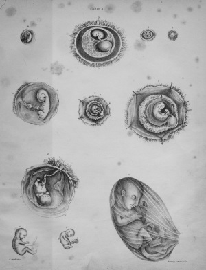 Obstetric Tables 3: embryos