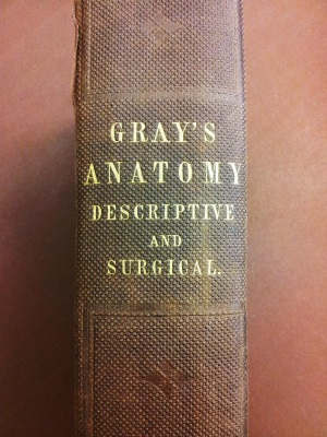Gray's Anatomy 1: spine