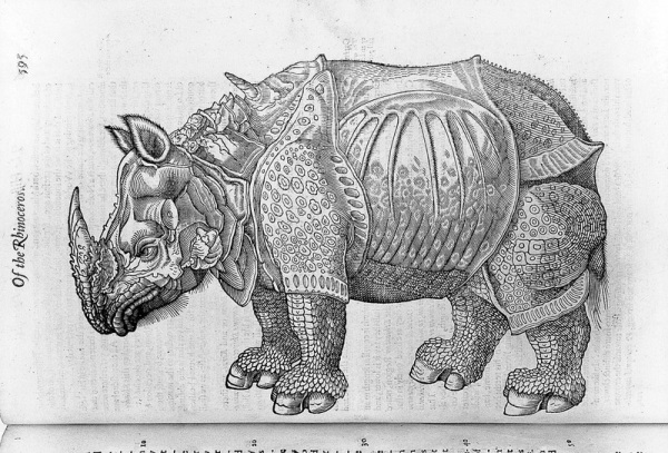Topsell 4: the Rhinoceros