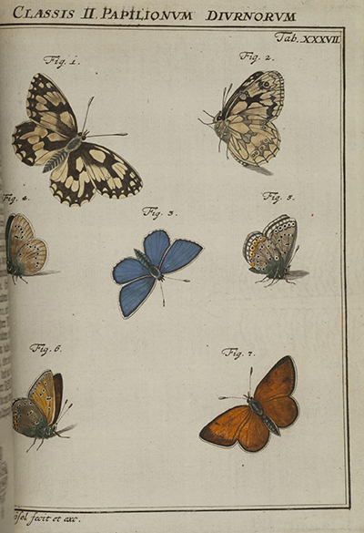 Illustrations of insects from Roesel's Die monatlich herauskommende Insecten-Belustigung