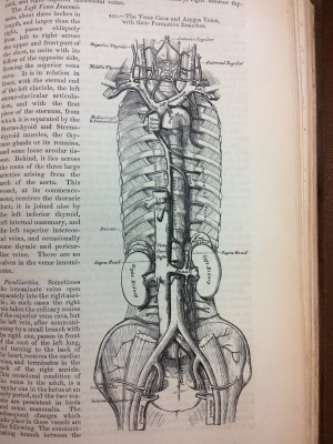 Grays Anatomy 1858 Royal College Of Surgeons