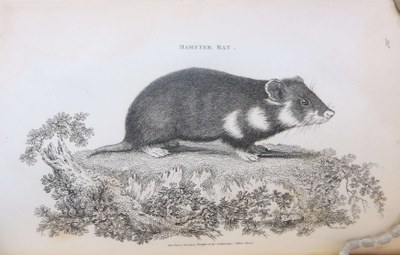 Hamsters in the Library — Royal College of Surgeons