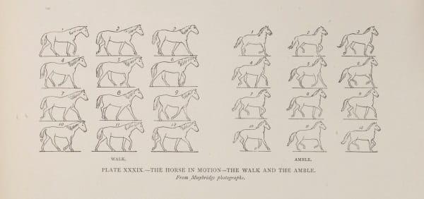 Studies in the art anatomy of animals: Ernest Thompson Seton