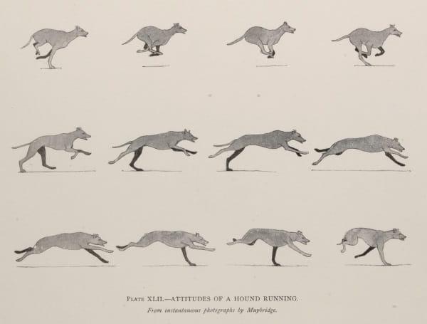 Studies In The Art Anatomy Of Animals Ernest Thompson Seton Royal