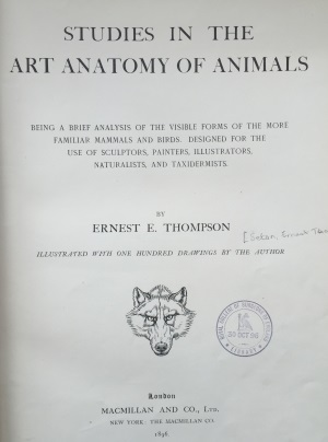 Studies In The Art Anatomy Of Animals Ernest Thompson Seton Royal